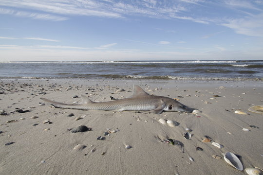Kleiner toter Hai am Strand