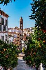 Fototapeta premium Wieża kościoła San Sebastian w Antequera w prowincji Malaga, Andaluzja, Hiszpania