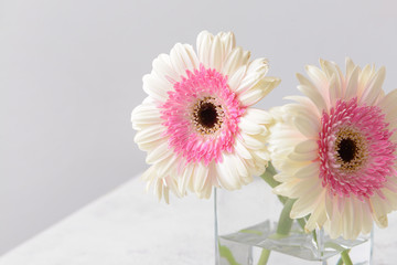 Poster Gerbera Vase with beautiful gerbera flowers on table