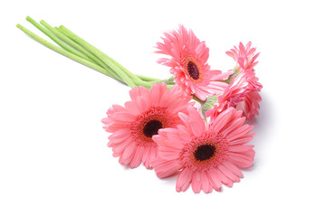 Papiers peints Gerbera Beautiful gerbera flowers on white background
