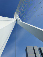 Aluminium Prints Swan Erasmus bridge over Meuse river in Rotterdam, the Netherlands. Abstract architecture details over blue sky background. Erasmusbrug called the swan, 284m long, designed by Ben van Berkel.