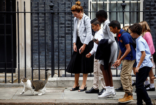 School children interact with Larry the cat at Downing Street in London