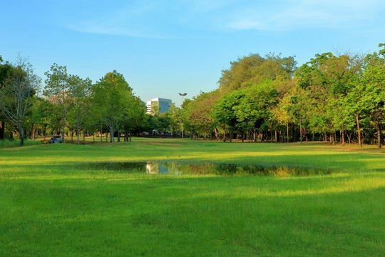 Puddle on green grass in park, City forest.
