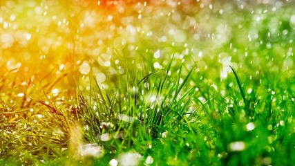 Fotobehang Gras Green grass under water drops sun day light close