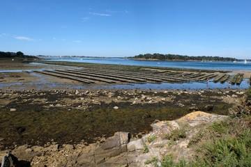 Parc à huîtres du Golfe du Morbihan en Bretagne