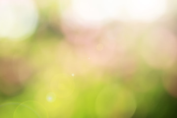 leaf bokeh plants in the garden. bokeh photo for wallpaper and background design needs