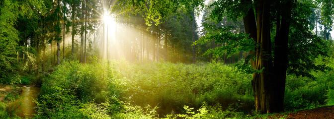 Fototapete - Lichtung im nebligen Wald mit Sonne, die durch Bäume scheint
