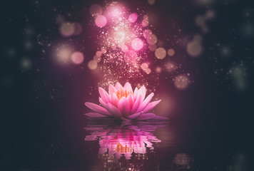 Foto auf AluDibond Lotosblume lotus reflection pink lighting purple background
