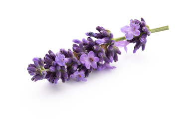 Lavender flowers on a white background. Wall mural