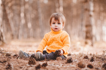 Cute baby boy 1-2 year old wearing knitted yellow sweater holding fir cones sitting outdoors....