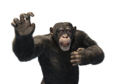 Chimp Reaching for Help