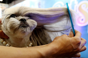 """A groomer combs a dog during """"Pet Experience"""" in Sao Paulo"""