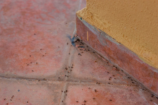 Ants on the tile