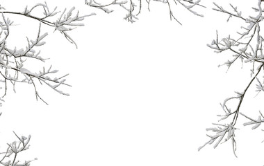 Twigs tree covered snow on a white background with space for text Fototapete