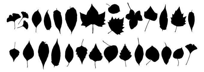 Set of Dry Black Autumn Leaves Isolated on White Background