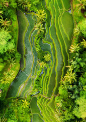 Fotobehang Bali Aerial view of rice terraces. Landscape with drone. Agricultural landscape from the air. Rice terraces in the summer. UNESCO World Heritage - Jatiluwih rise terrace, Bali, Indonesia. Travel - image