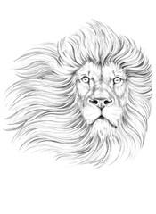 Drawing lion head, portrait lion, tattoo