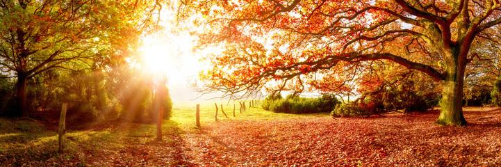 Fond de hotte en verre imprimé Sauvage Landschaft im Herbst mit Wald und Wiese bei strahlendem Sonnenschein