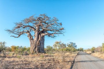 Landscape with a gravel road and a baobab tree