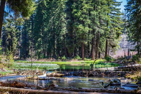 Nort Fork Little Butte Creek