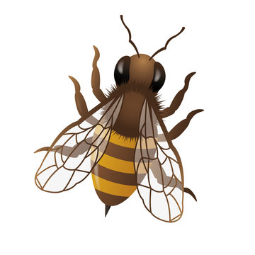 Three dimensional honey bee illustration on white background