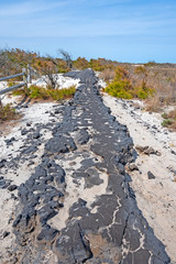 Old Eroded Road on a Barrier Island