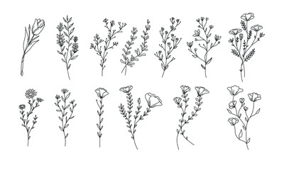 plant and floral lineart illustration for romatic decoration or stock of wedding print, flower vector bundle
