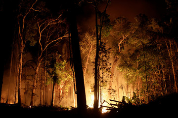 A fire burns a tract of Amazon jungle as it is cleared by loggers and farmers near Porto Velho