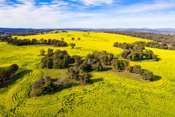 Canola Fields in Toodyay, Western Australia