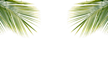 Coconut leaf on white background