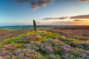 Wall Mural - Sunset over purple heather in bloom at Little Blakey Howe
