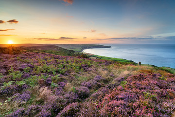 Photo Stands Deep brown Summer heather in bloom on the North York Moors