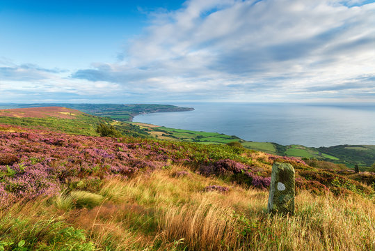 Summer on the North York Moors national park in Yorkshire