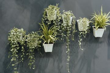 Green houseplant in small plastic flowerpots