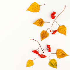 Foto op Aluminium Herfst Autumn composition with autumn dried leaves and rowan berries on white background. Flat lay, copy space.