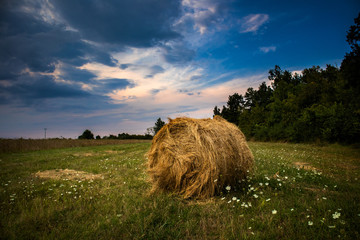 Harvested straw field with Hay bale on agriculture field at sunset