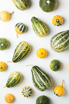 Pumpkins and squash different vegetables on white background flat lay