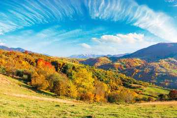 mountain countryside on a sunny autumn evening. beautiful rural landscape in afternoon light. trees on the grassy hills. sky with beautiful clouds above the distant ridge
