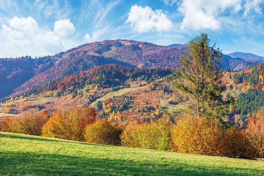 trees in fall foliage in mountainous countryside. beautiful autumn landscape in afternoon light. grassy meadow and sky with clouds.