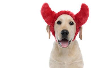 happy labrador retriever puppy dog wearing devil horns for halloween Wall mural