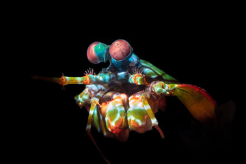 Colorful Mantis Shrimp with Complex Eyes
