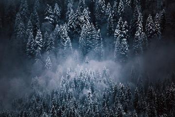 Winter postcard.