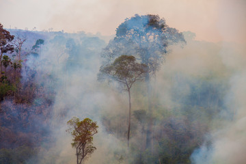 Recent burned and deforested area within Jamanxim National Forest. Amazon Rainforest -  Pará / Brazil