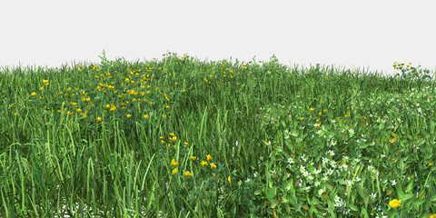 Grass isolated. Image useful for banners, posters or photo maipulations. 3d rendering.