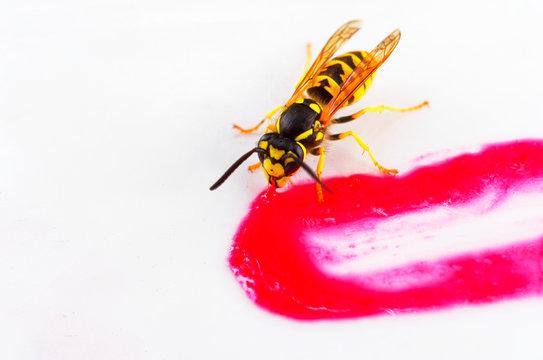 Wespe die an einer Erdbeersoße isst als Makro