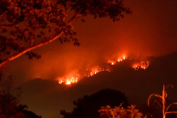 Fototapeten Braun Amazon forest fire disater problem.Fire burns trees in the mountain at night.