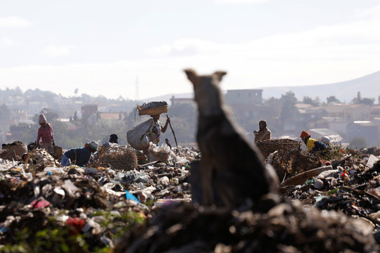 A dog watches people work in the Andralanitra garbage dump in Antananarivo
