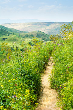 Rural Path among Green Hills and Blooming Wild Flowers in Spring. Pure Nature Romantic Hiking Trail.