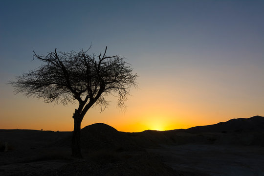 Lonely Tree Black Silhouette Africa Savanna Nature Sunset Landscape Vew Background Backdrop