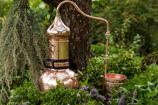 Alembic is a distilling apparatus of Arabic origin which may be used to distill essential oils and a variety of alcoholic beverages. Artemisia abisinthium  distillation.